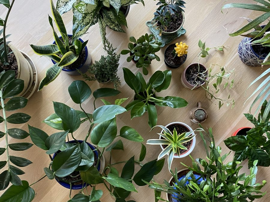During Covid-19, many of us have been staying inside, without an important part of out environment – plants.