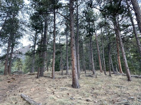 Chautauqua open space and hiking trails offer many Boulderites a perfect location for forest bathing!