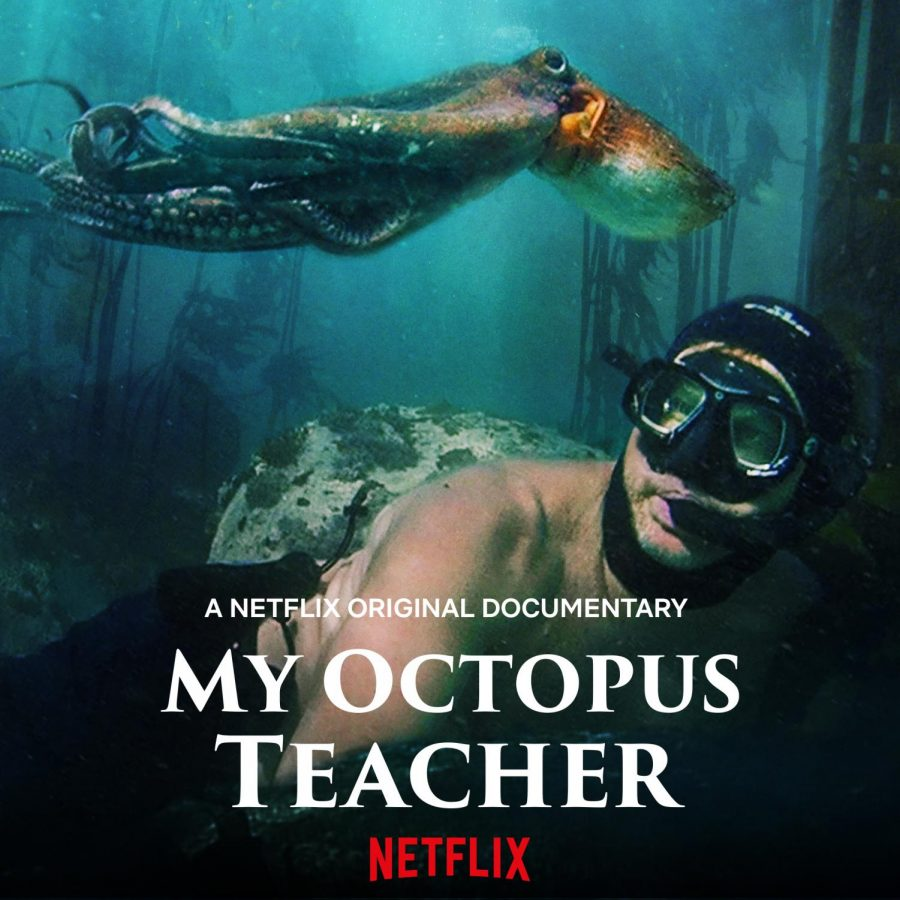 My Octopus Teacher tells of the unlikely friendship between Craig Foster and an octopus.