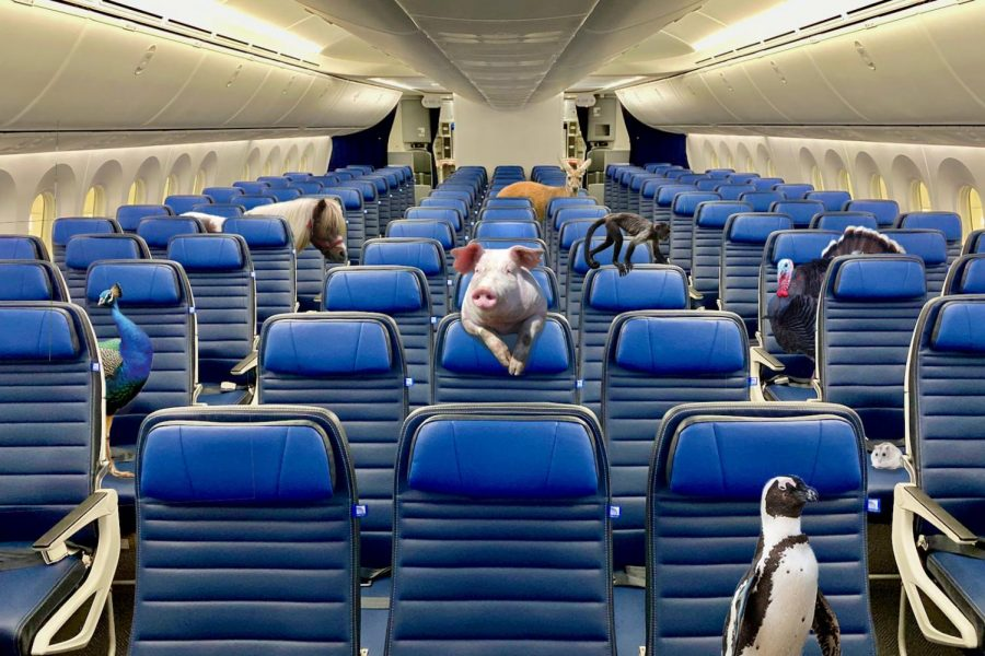 Without their emotional support animals, passengers face a turbulent future of air travel.