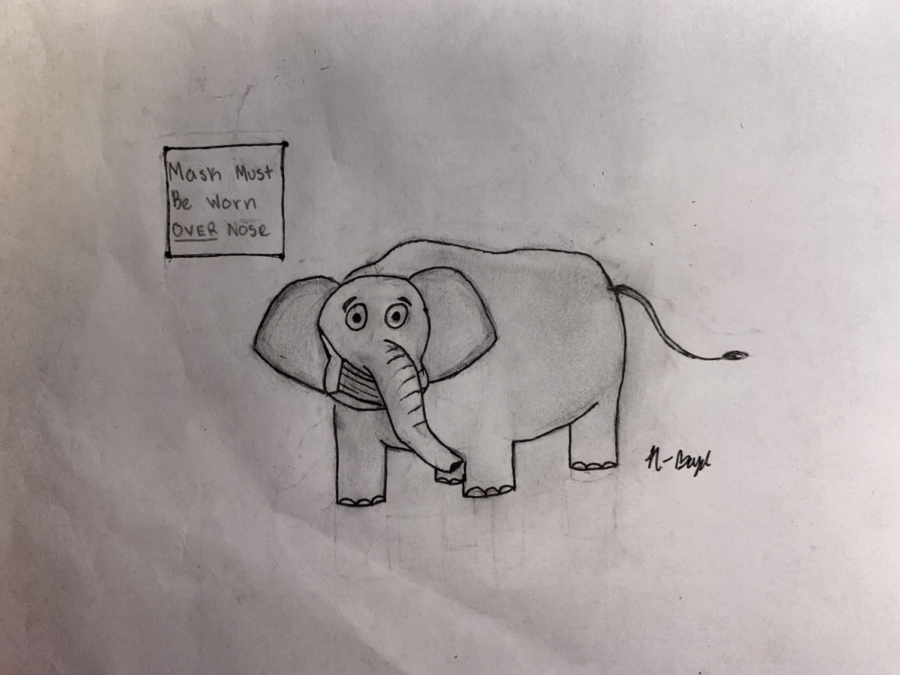 If freedom is the piece de resistance of the Republican argument, then social liberties are the glaring bright red elephants in the room. Cartoon by Norrie Boyd.